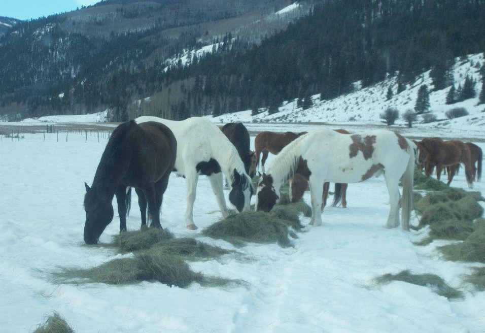 4UR all-inclusive Colorado guest ranch horses.