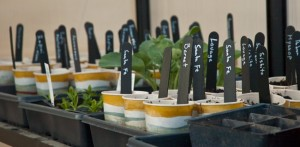 homegrown plants with diy markers sit inside greenhouse