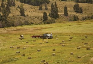 picking up hay in colorado guest ranch pasture