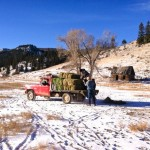 men throw hay bales to horses off old red feed truck