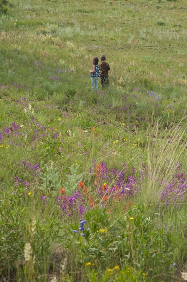 purlple locoweed sits in foreground as two children play in the background on a grassy Colorado hillside
