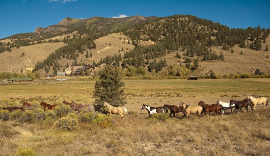 horses climb along a hillside to their fall rocky mountain pasture