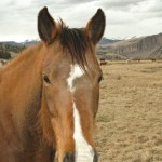 bay mare horse with white blaze looks at camera with pallisade mountain range in background