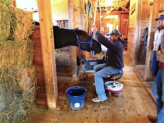 Equine Dentist Walck has a horse in stall, head is being held up by pulley as he sedates the horse.