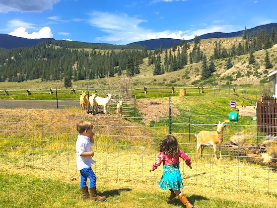 A young boy and girl looking through the fence at five goats.