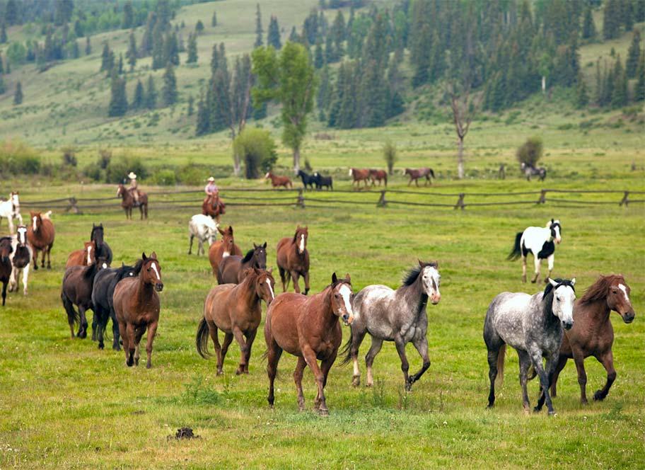 Herd of horses at 4UR