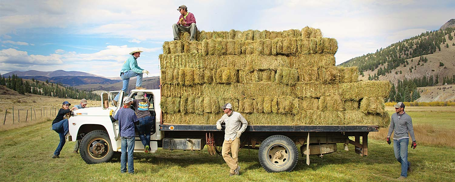 4UR ranch employees loading hay bales