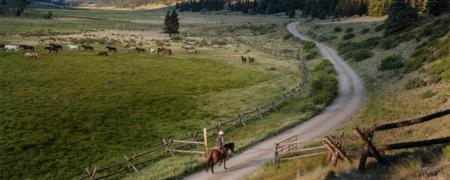 Cowboy on the road with horses in pasture