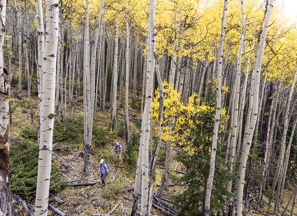 Hiking through autumn aspens at 4UR Ranch